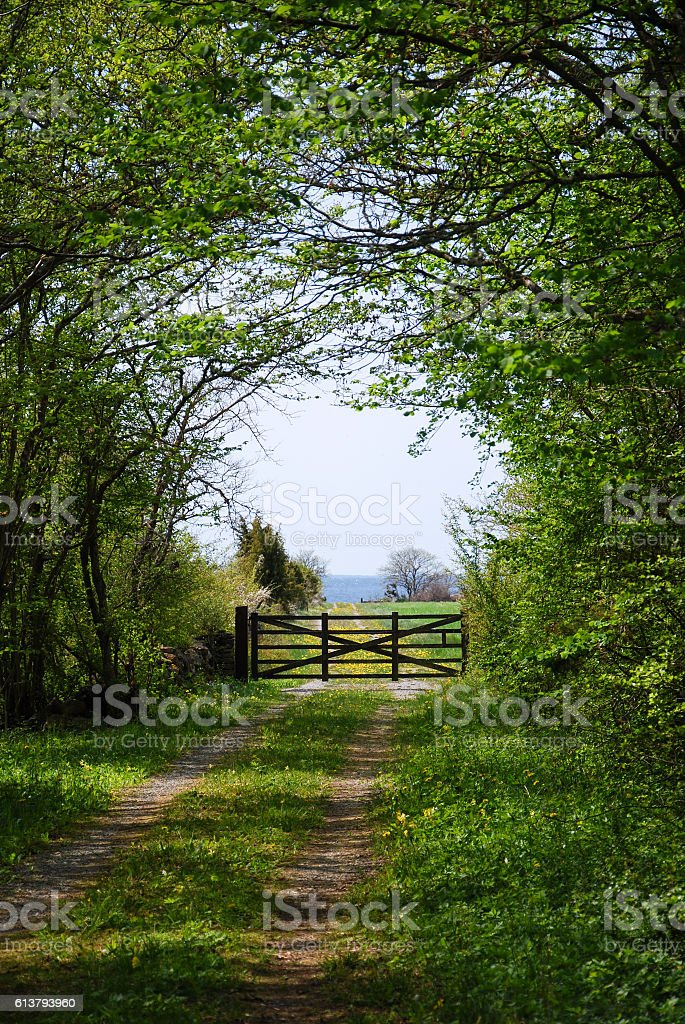 Old wooden gate by a green tunnel of leaves stock photo