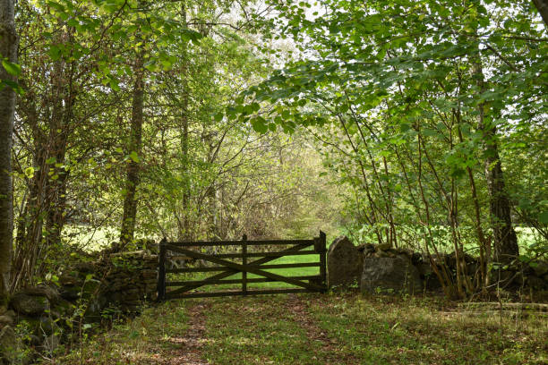 Old wooden gate in the countryside stock photo