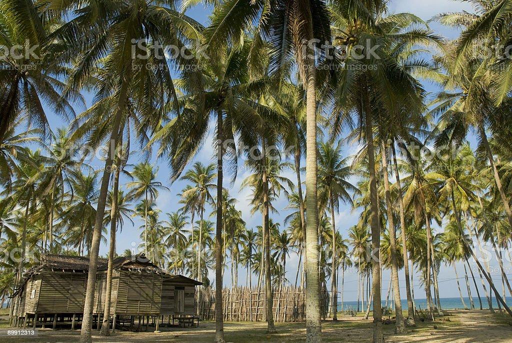 Antigua casa de madera entre las palmeras foto de stock libre de derechos