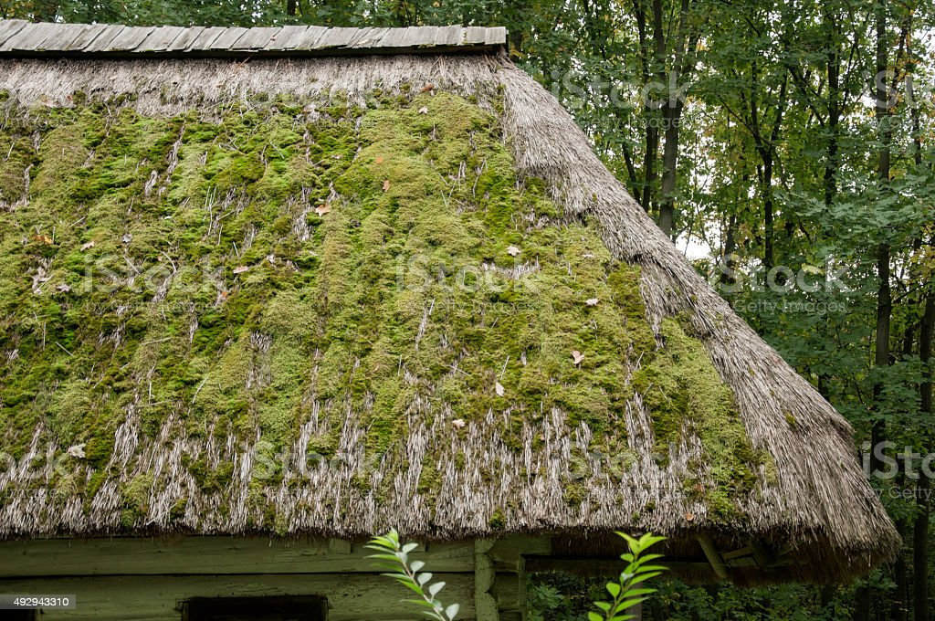 Old wooden house, white  thatched roof covered  moss in  forest stock photo