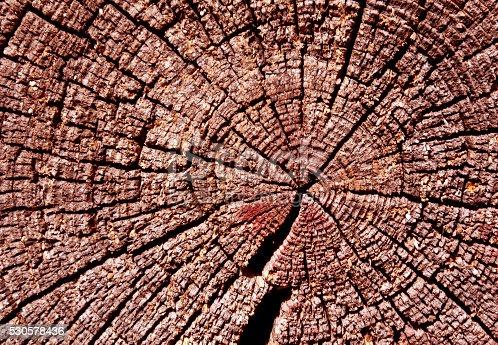 465559373 istock photo Old wooden log texture. 530578436