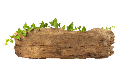 Old wooden plank entwined with ivy. High quality !!!  This file includes clipping path.