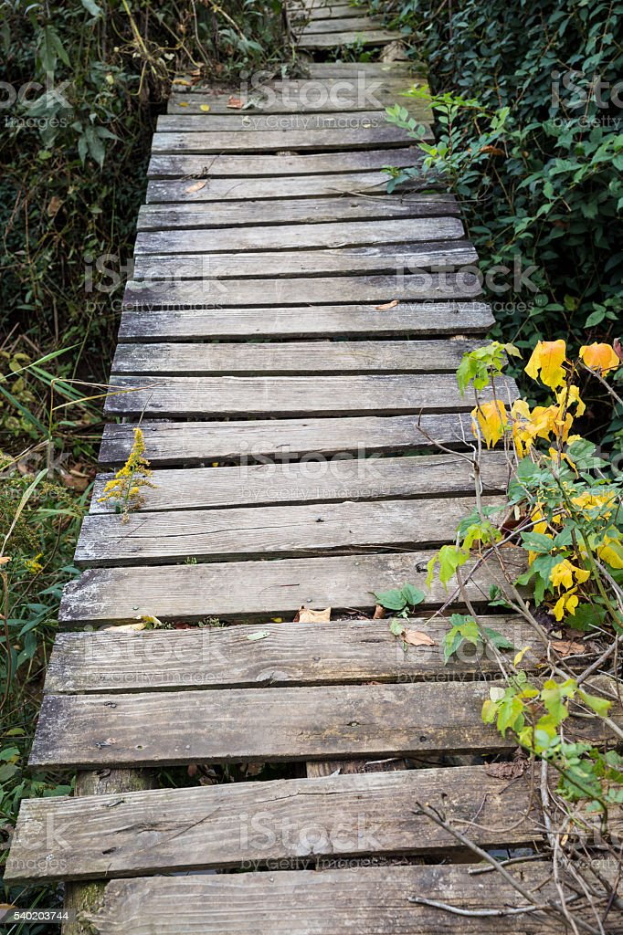 Old Wooden Plank Walkway stock photo