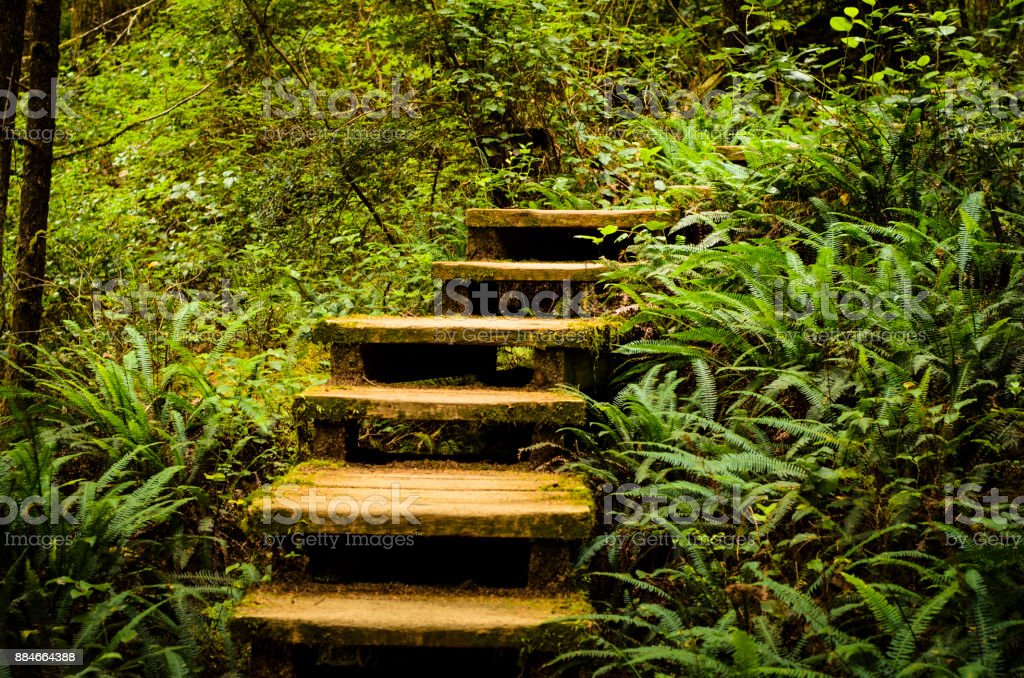 Old Wooden Stairs on a Hiking Trail stock photo