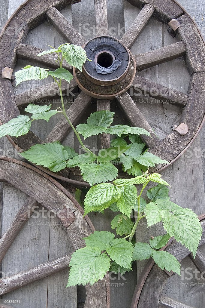 Old wooden wagon wheels and green plantlet royalty-free stock photo