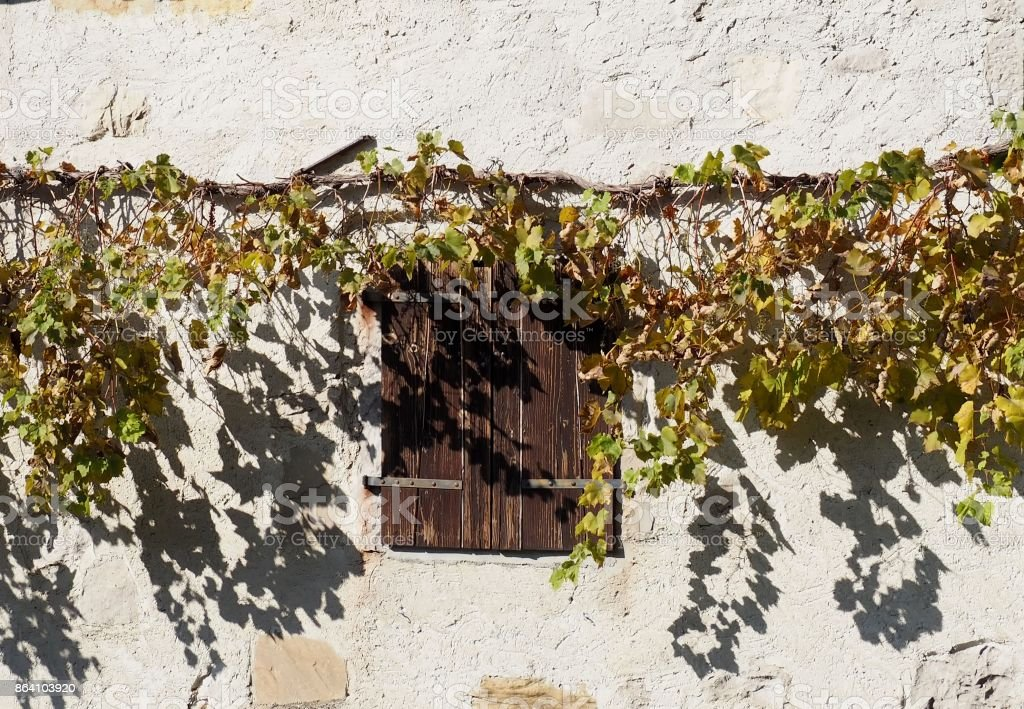 Old wooden window shutters under a vine plant on a rustic white wall background royalty-free stock photo