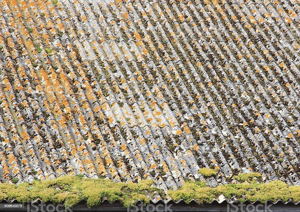 Antigos desgastado amianto telhado com alga - foto de acervo