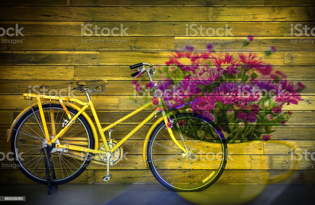 Old yellow bicycle and flower in vas on wooden background , multiply effect stock photo