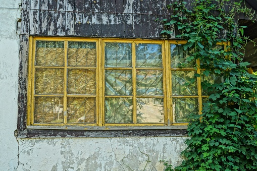 old yellow window on the wall of a house overgrown with green vegetation