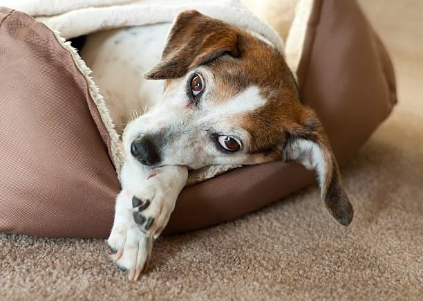 hund entspannen - katzen kissen stock-fotos und bilder