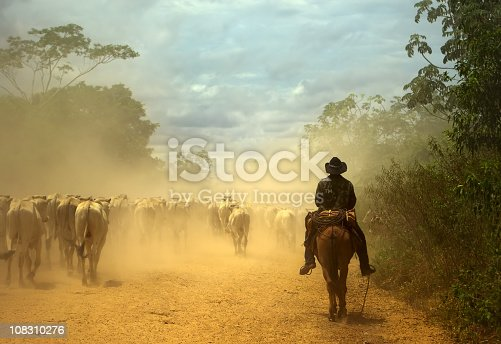 South-american traditional cowboy at cattle drive. Pantanal wetlands, Mato Grosso do Sul state, Brazil. World Nature Heritage site and Biosphere Reserve.