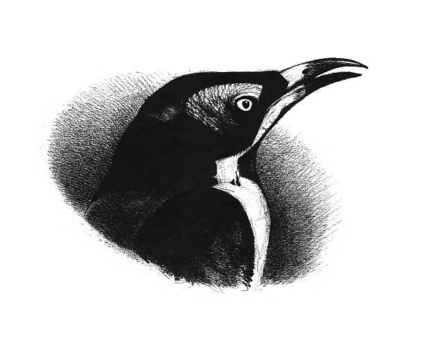 old-fashioned pencil drawing of a bird's head stock photo