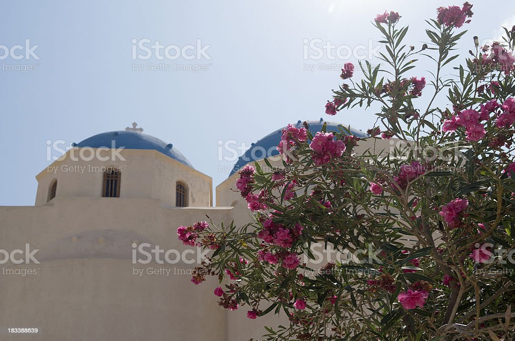 Oleander for the church in Perissa. royalty-free stock photo