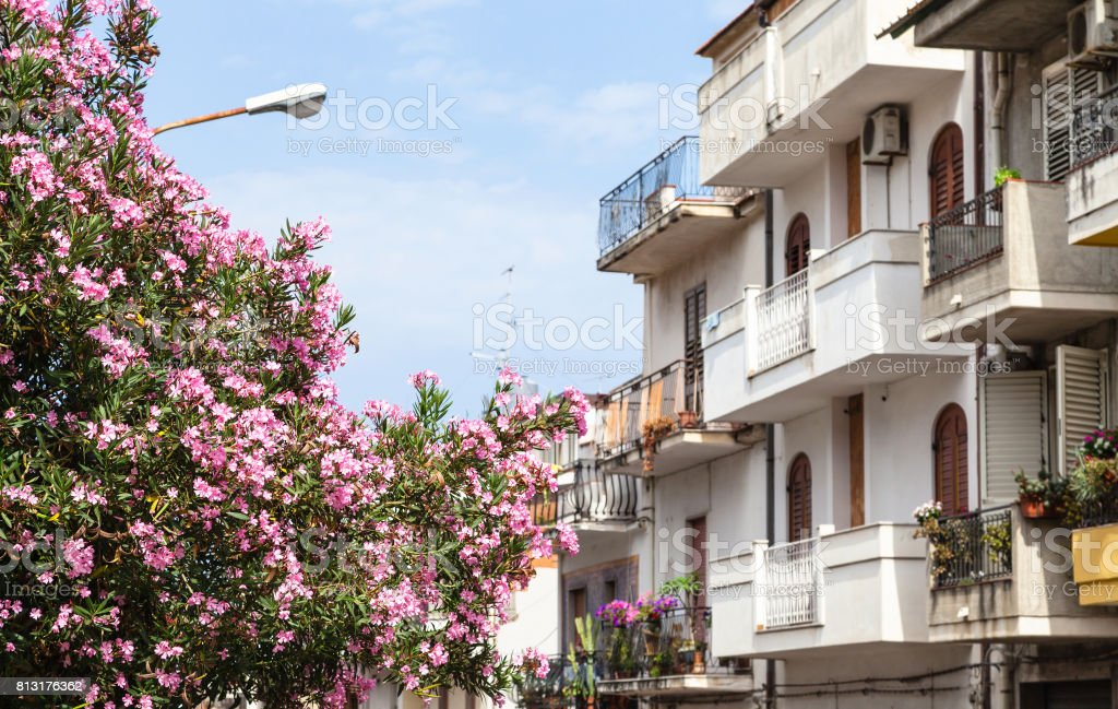 oleander tree and houses in Giardini Naxos town stock photo