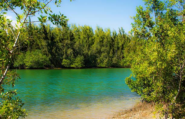 Oleta River State Park stock photo