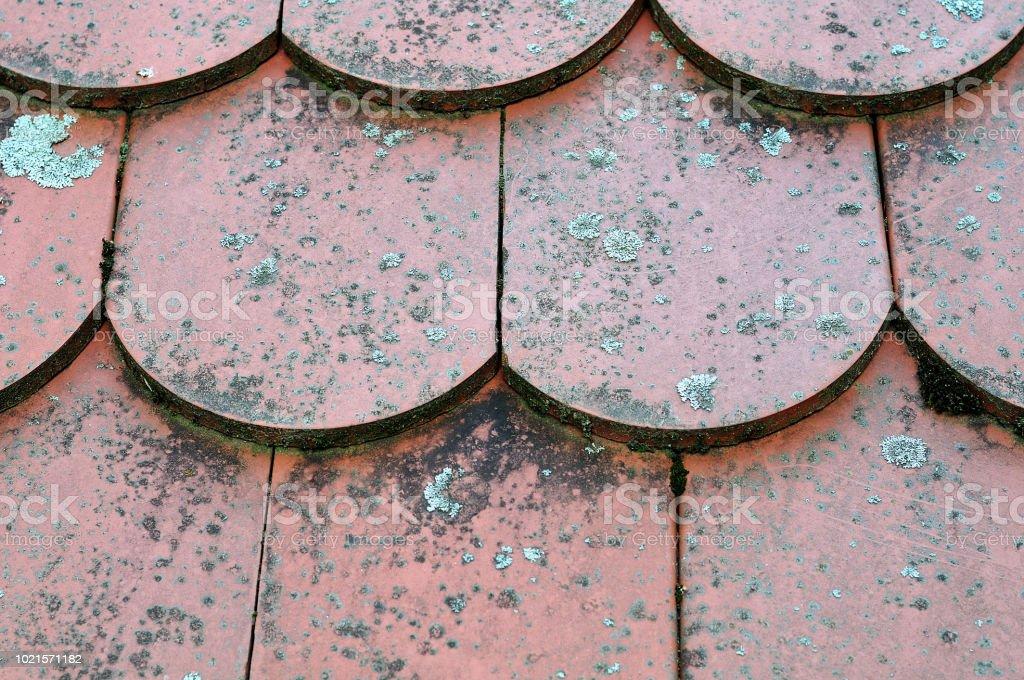 OLF-Dachziegel mit Flechten gewachsen – Foto
