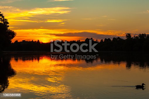 A gorgeous orange sunset on the lake, the silhouette of a forest and trees on the horizon and a duck sailing past, leaving ripples on the water.