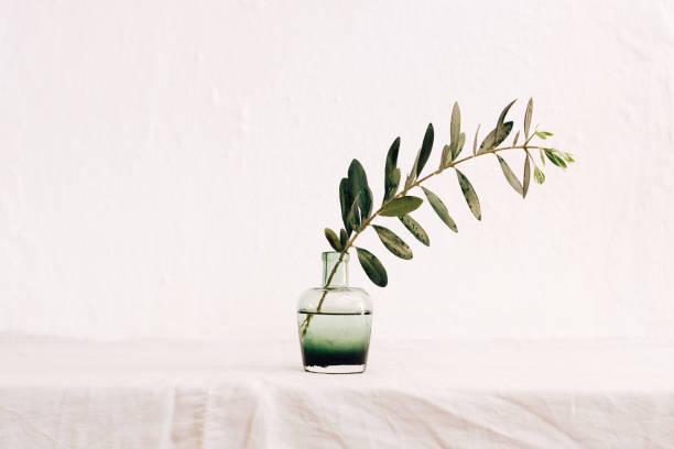olive branch in vase - ramoscello d'ulivo foto e immagini stock
