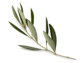 istock Olive Branch Isolated On White Background 184999864