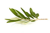istock Olive Branch 182178113