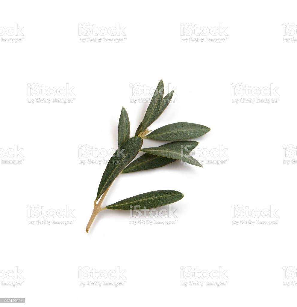 olive branch zbiór zdjęć royalty-free