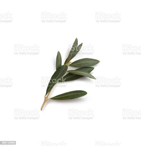 Olive branch picture id965100694?b=1&k=6&m=965100694&s=612x612&h=jvybhzc c ojshlnscgmkstshg4lfmfcwgjwzoswmrq=