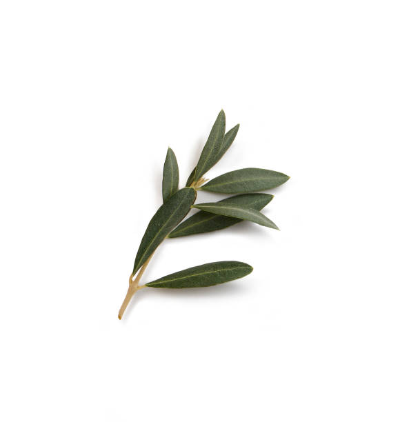olive branch small olive branch with leaves isolated on white background olives stock pictures, royalty-free photos & images