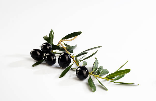 Olive branch with olives on white background​​​ foto