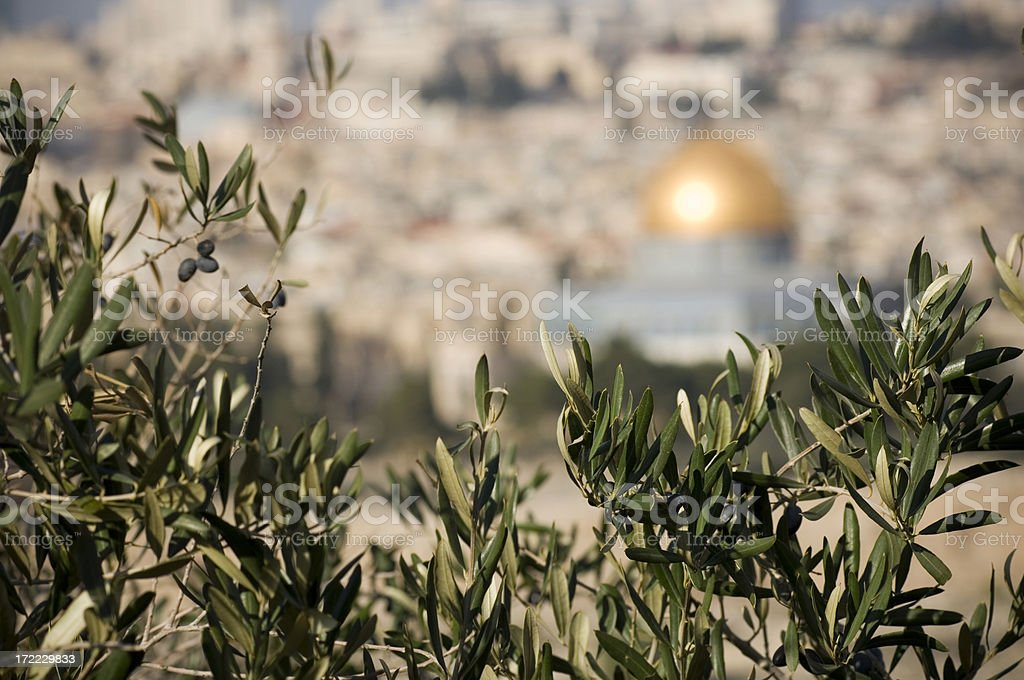 Olive branches royalty-free stock photo