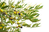 istock Olive branches with olives 183284354
