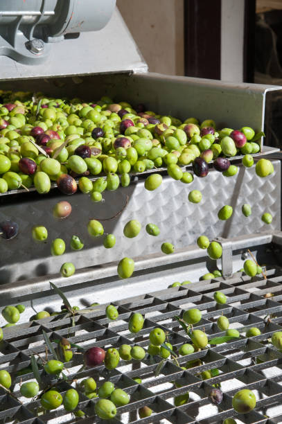 olive cleaning phase - defoliator stock pictures, royalty-free photos & images