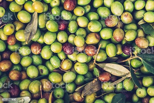 Olive fruit picture id623127830?b=1&k=6&m=623127830&s=612x612&h=kks2 qzp9ns acyr7hse2qzbimr y1q5uni lwuuxi8=