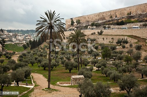 olive garden in jerusalem israel stock photo more pictures of ancient istock - Olive Garden Palm Desert