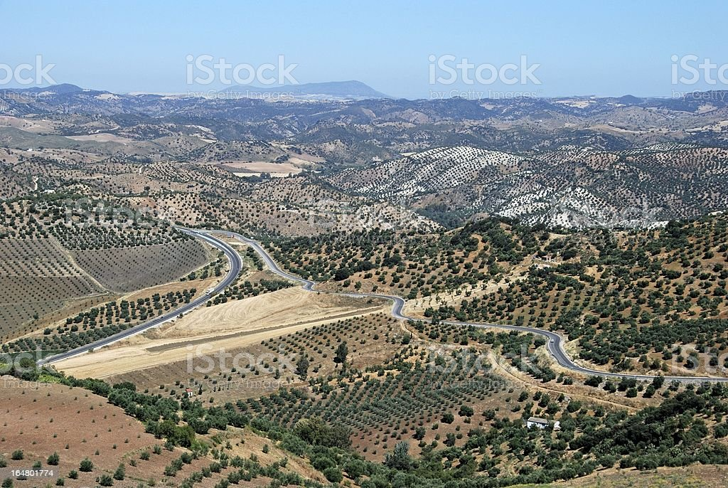 Olive groves, Olvera, Andalusia, Spain. royalty-free stock photo