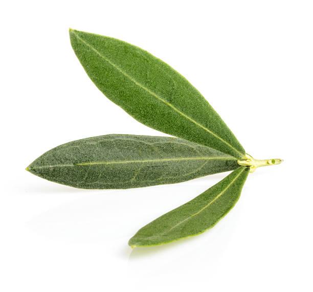 oliva foglie con ombra isolato su bianco - ramoscello d'ulivo foto e immagini stock