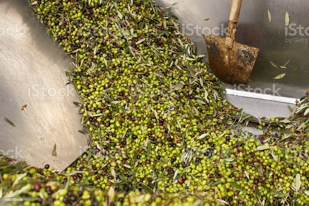 Olive Mill Steel Feeder Container stock photo