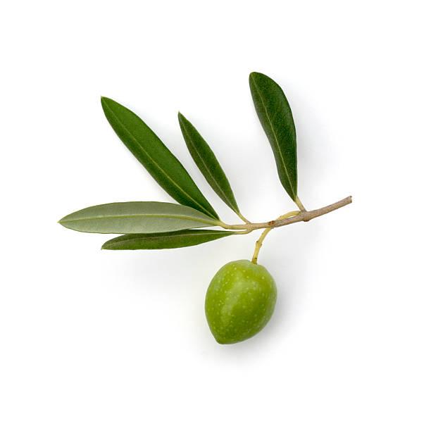 verde oliva - ramoscello d'ulivo foto e immagini stock