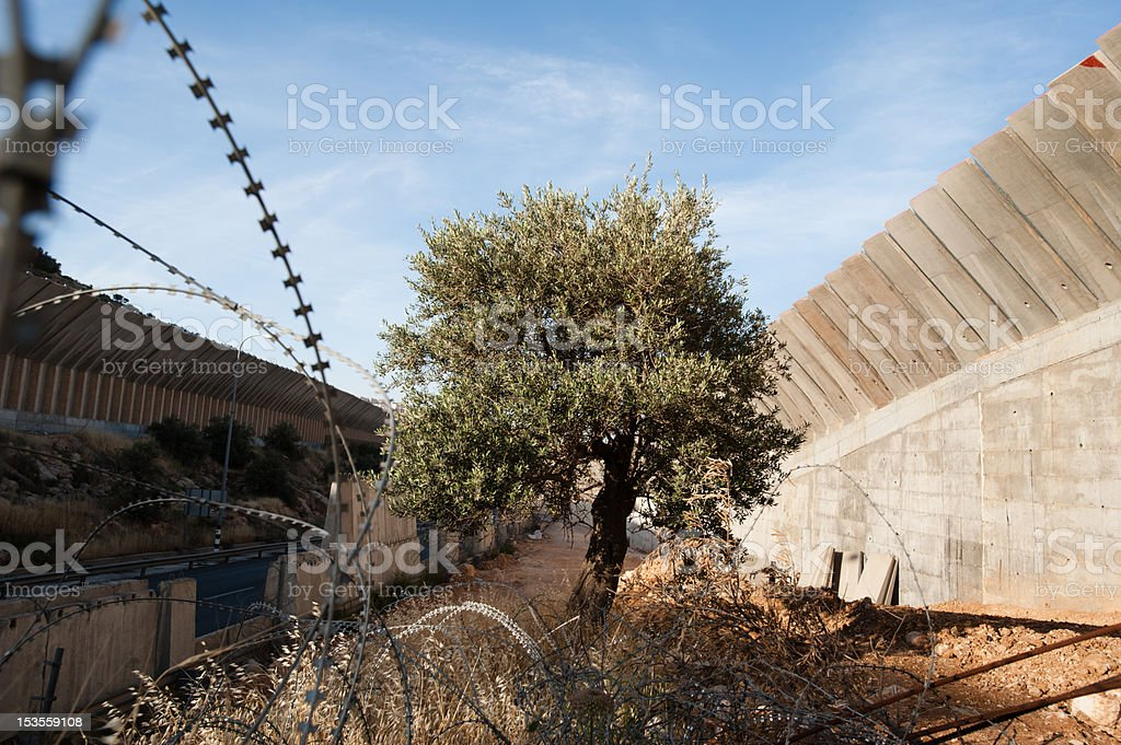 Olive Tree and Israeli Separation Wall stock photo