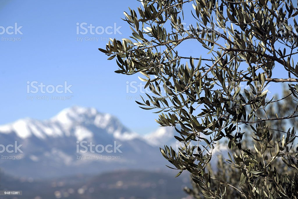 olive tree and mountains royalty-free stock photo