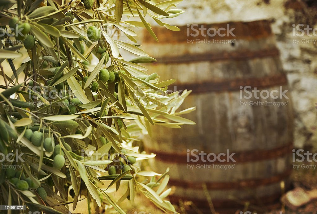 Olive tree branch and barrel stock photo