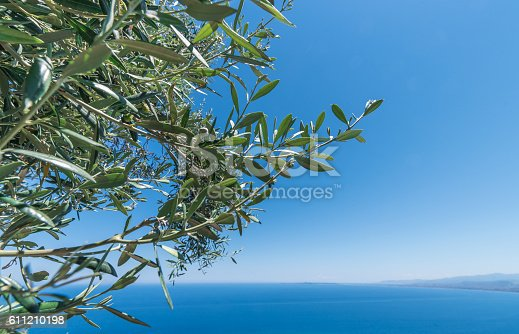 istock Olive tree branches with sea in the background 611210198
