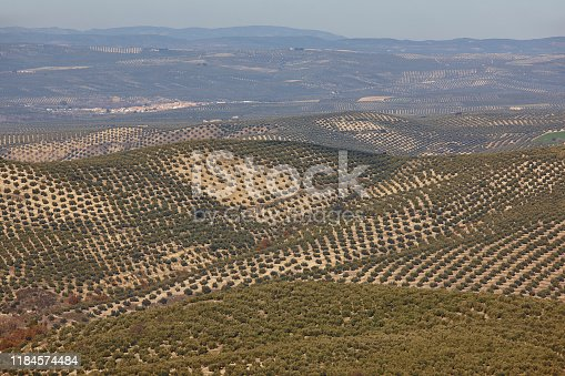 1135138312 istock photo Olive tree fields in Andalusia. Spanish agricultural landscape. Jaen 1184574484