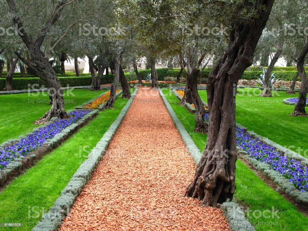 Olive tree garden, Bahai Temple, Haifa, Israel royalty-free stock photo