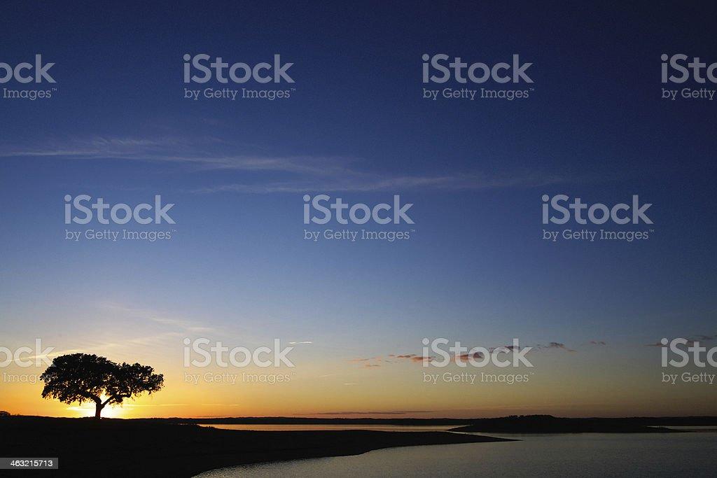 Olive Tree in Alentejo at Sunset stok fotoğrafı