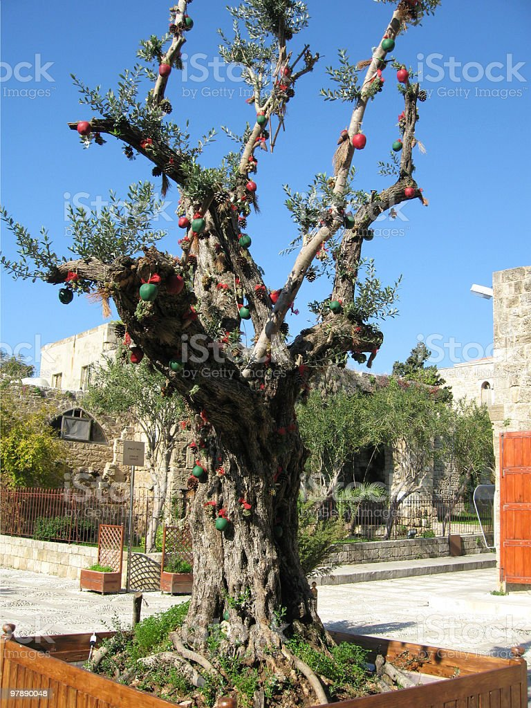 Olive Tree With Christmas Decorations royalty-free stock photo