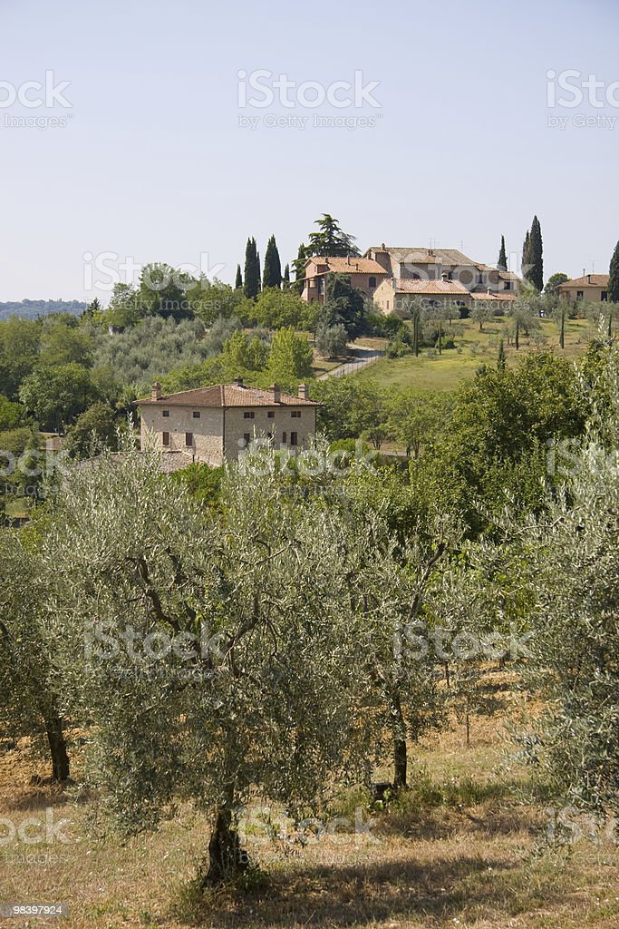 Olive trees and farm houses royalty-free stock photo