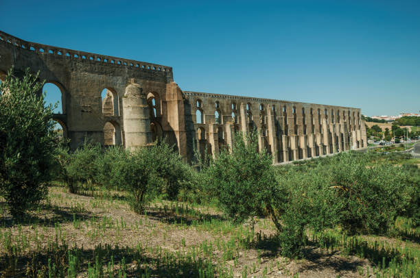 olive trees in front aqueduct with arches near road to elvas - elvas imagens e fotografias de stock