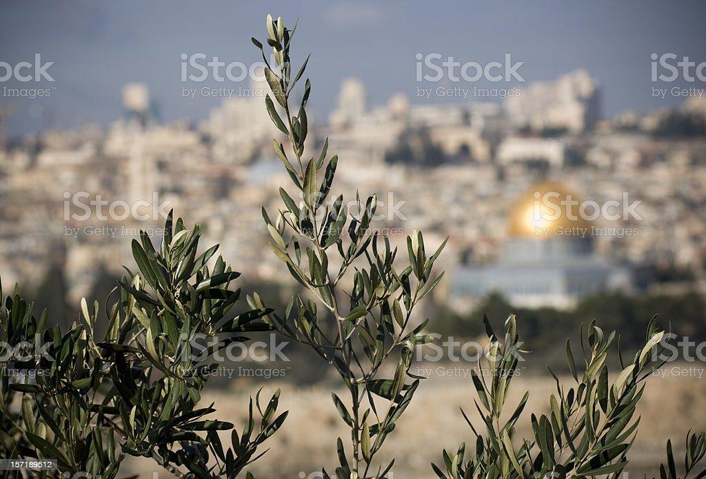 Olive trees in Jerusalem stock photo