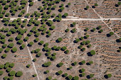 Aerial photo of field with olive trees, near Madrid, Spain