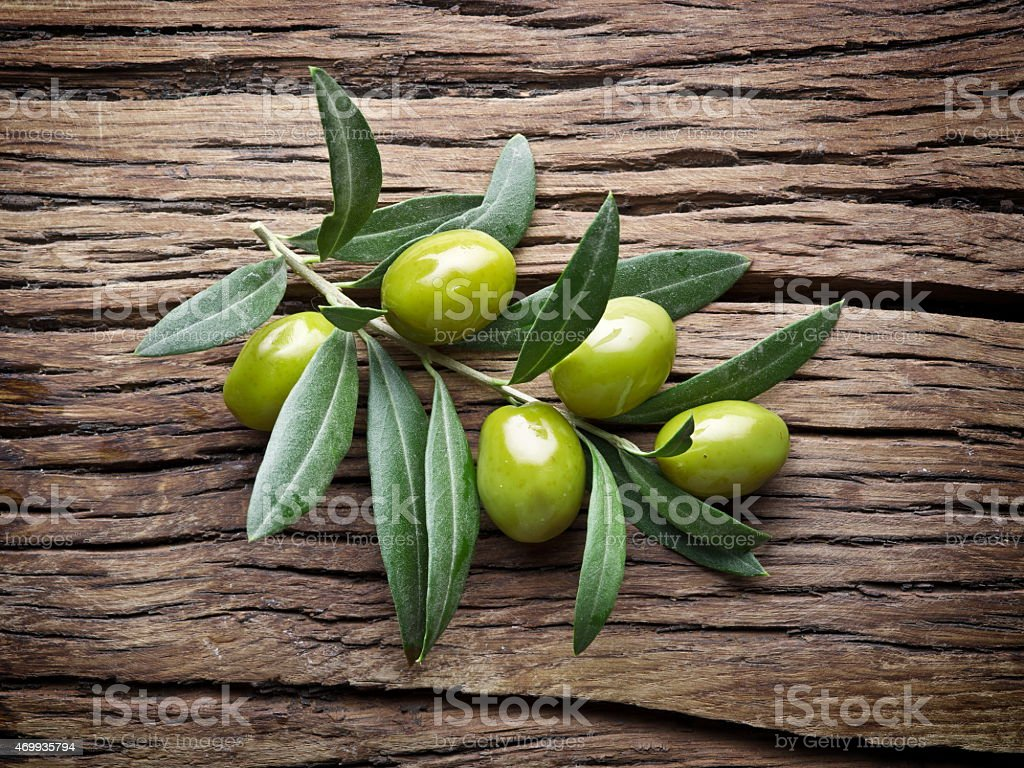 Olive twig. stock photo